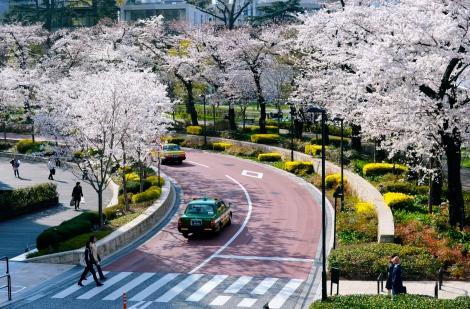 Midtown's Sakura Dori